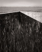 grass-and-2-concrete-walls.jpg