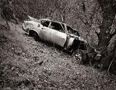 Car-against-tree---Rush-Creek-Preserve.jpg