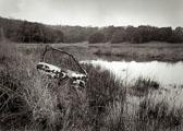 car-door---Rush-Creek-Marsh.jpg