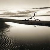 branch-on-River-Beach.jpg