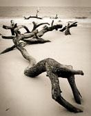 crawling-driftwood.jpg