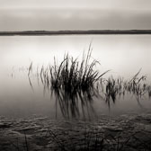 grass-reflection-muddy-shore-13x13-reflective-scan.jpg