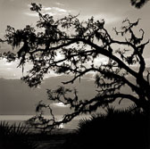 oak-at-river-beach.jpg