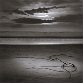 tangled-root-on-beach-13x13-reflective-scan.jpg
