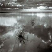 two-weeds-in-lagoon-sunrise-13x13-reflective-scan.jpg