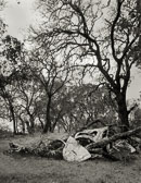 VW-under-Oak---Rus-Creek-Preserve.jpg
