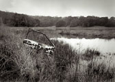 car-door---Rush-Creek-Marsh.jpg