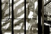 Falkirk-Greenhouse--4.jpg
