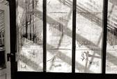 Falkirk-Greenhouse--7.jpg