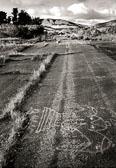 old_road_Nicasio.jpg