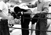 050_boxer.jpg
